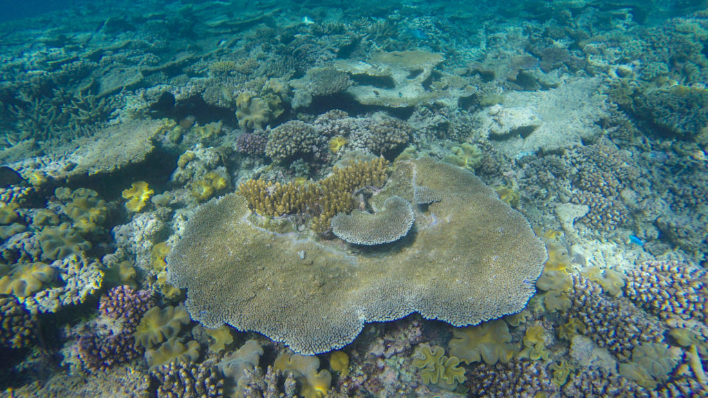 coral-great-barrier-reef-cairns-queensland