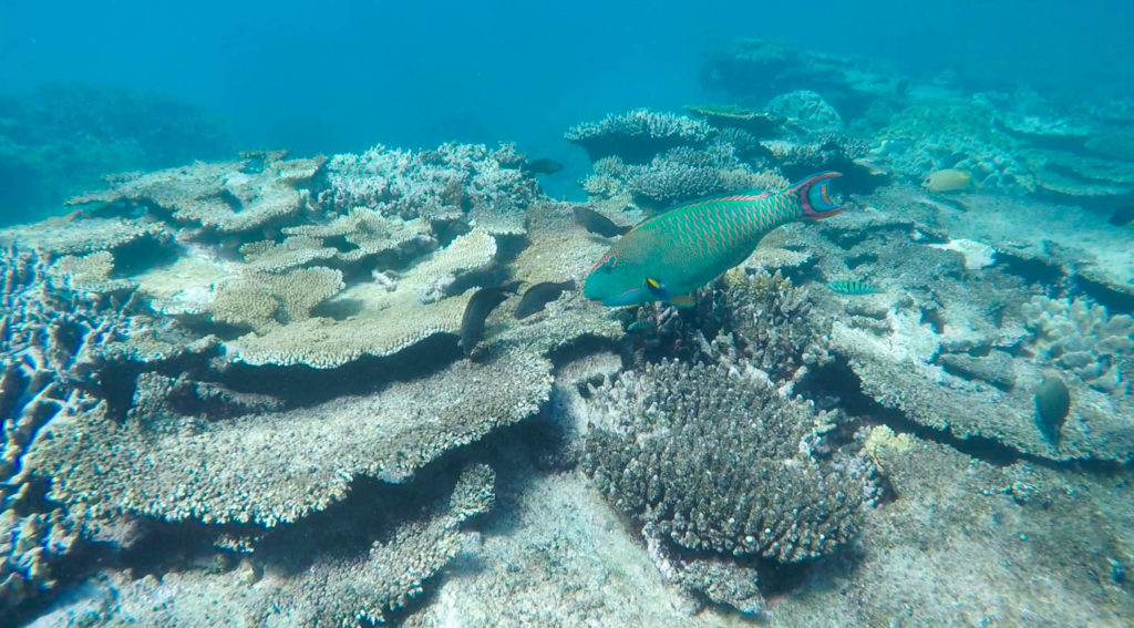 great-barrier-reef-fish-coral
