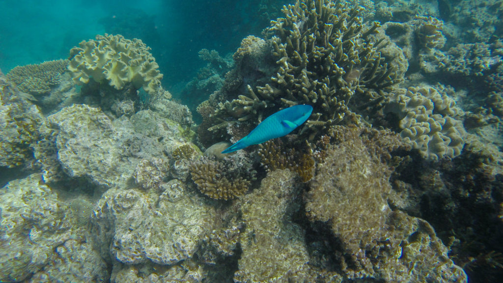 fish-swimming-coral-great-barrier-reef