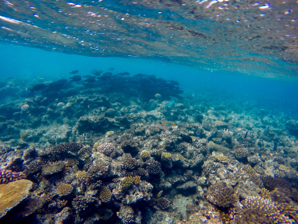 school-of-fish-great-barrier-reef