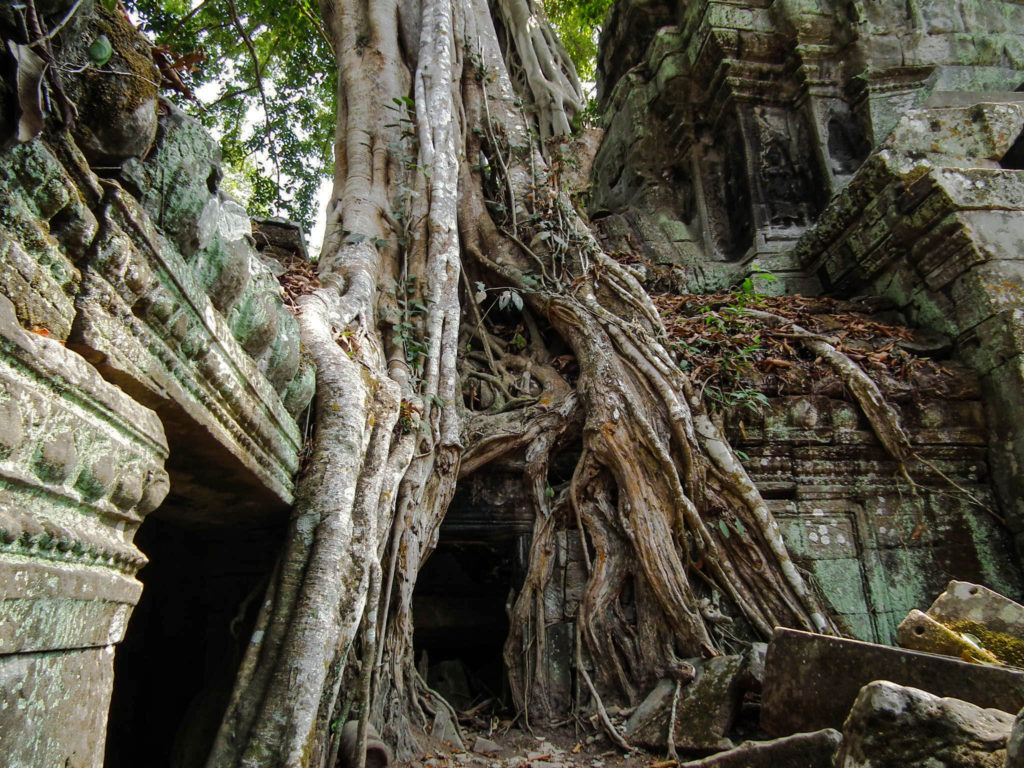 tree-roots-ta-prohm-temple-ruins-siem-reap-cambodia