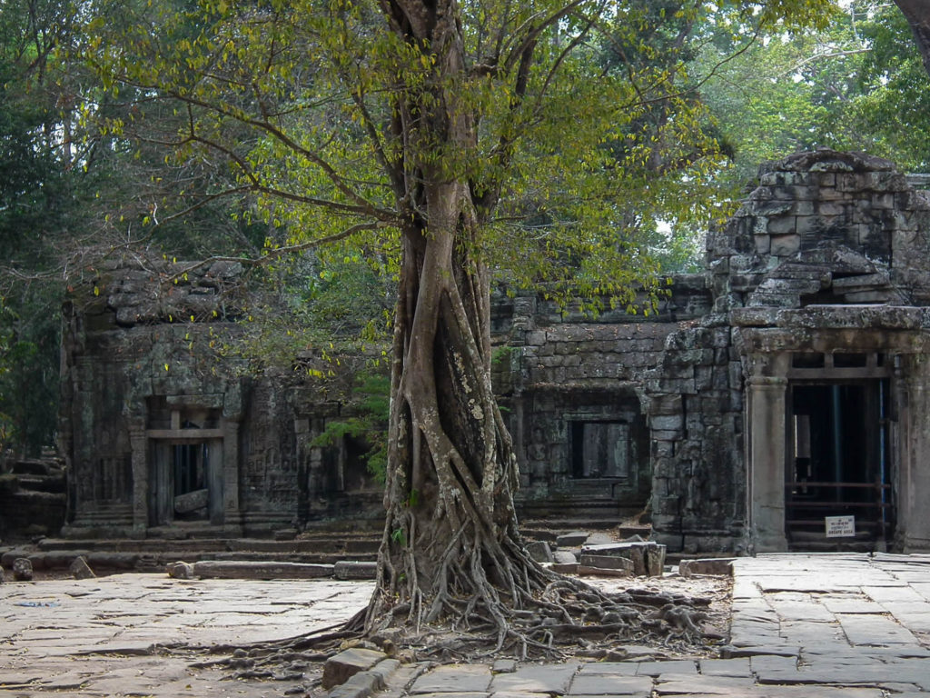 tree-ta-prohm-siem-reap-cambodia-1