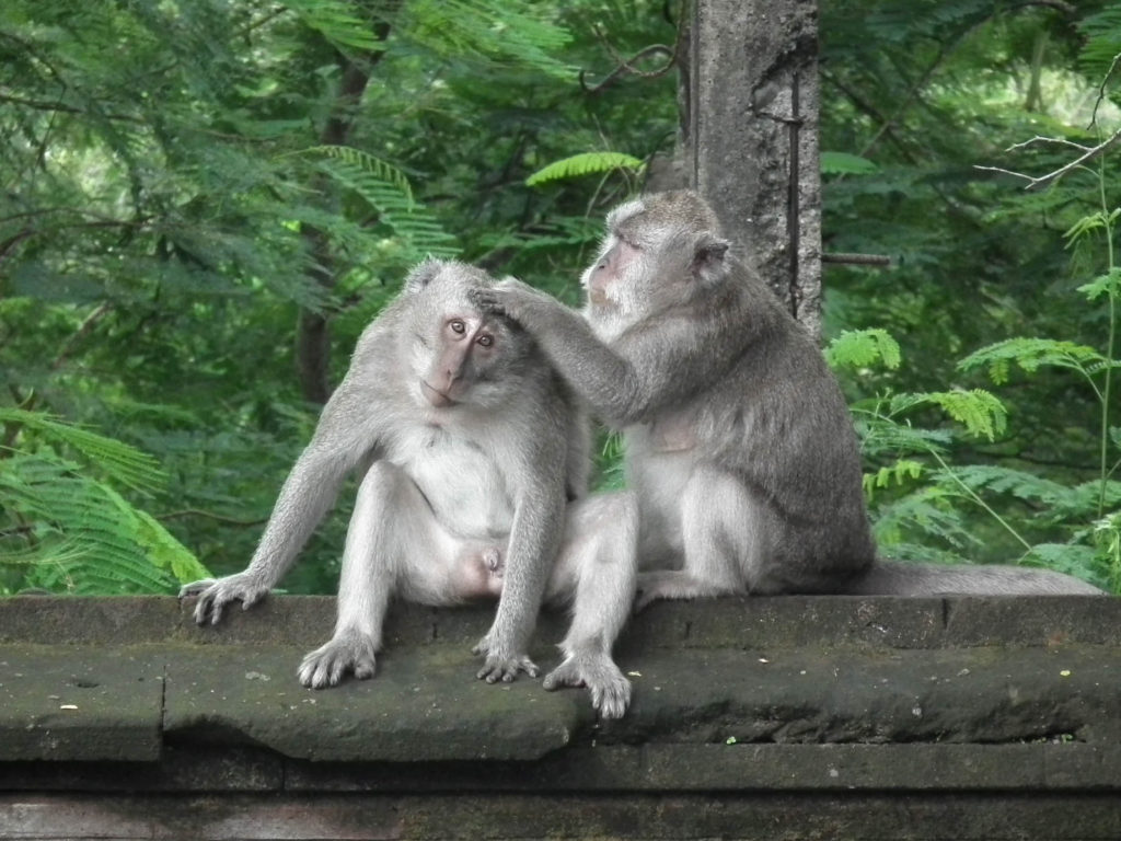 monkeys-uluwatu-temple-temples-to-visit-in-bali-indonesia
