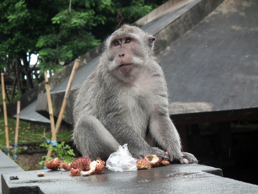 monkey-uluwatu-temple-temples-to-visit-in-bali-indonesia