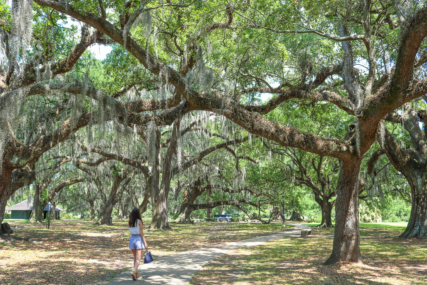 city-park-new-orleans-louisiana-usa • From All Corners